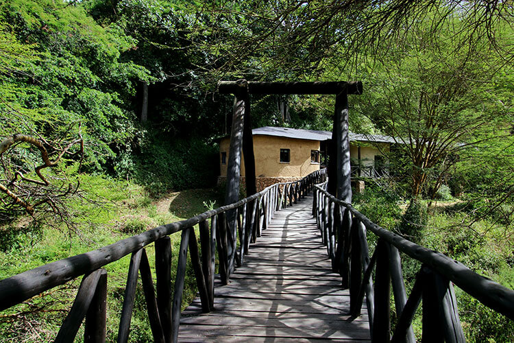 The wooden bridge and entrance stretching toward The Emakoko