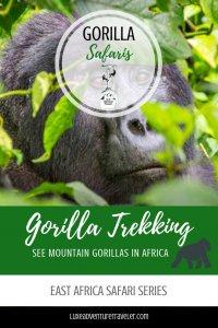 Gorilla Trekking Rwanda Pinterest Pin