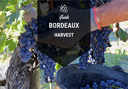 Guide to the Bordeaux Wine Harvest Button