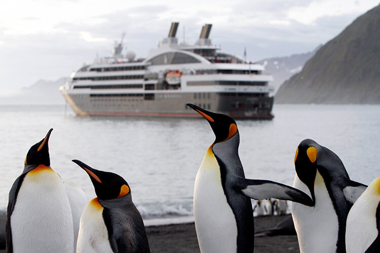 Emperor penguins on the beach in Antarctica with the Ponant ship in the background