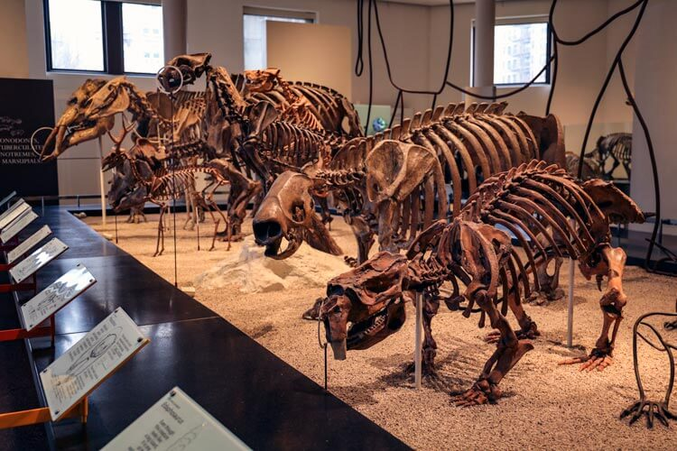 Fossils in the Hall of Saurischian Dinosaurs at the American Museum of Natural History