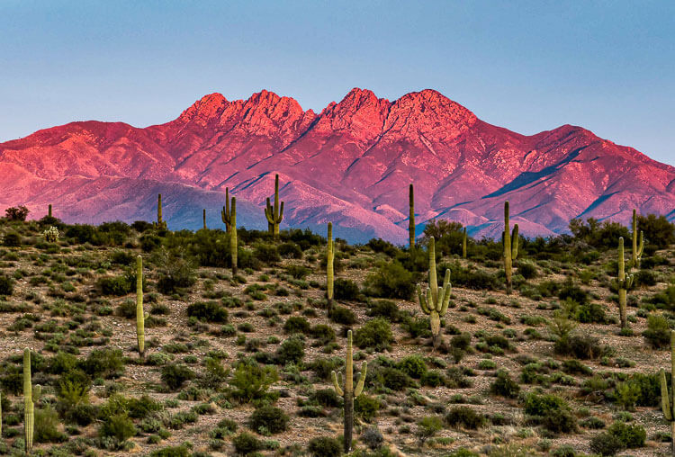 Browns Peak and the Four Peaks Wilderness Area seen with Saguaro cactus in the foreground.