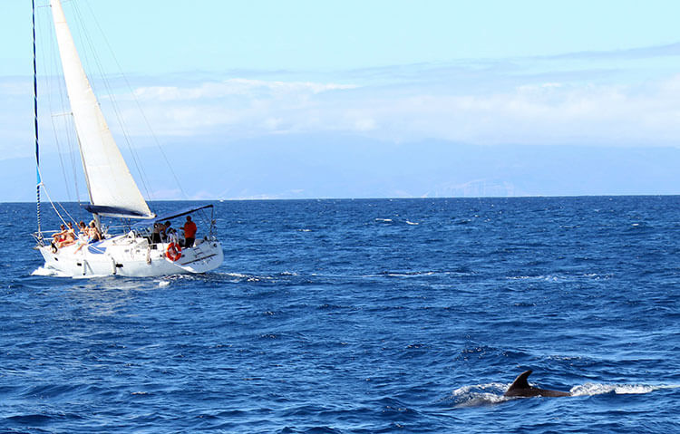 A pilot whale comes come alongside our boat in Tenerife