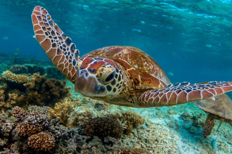 Two sea turtles swim underwater in Tenerife