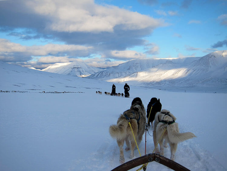 We're third in train of sled dog teams with two teams ahead of us in snowy Svalbard