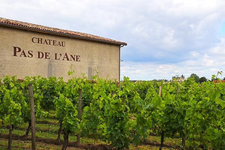 The winery building set behind grape vines at Château Pas de l'Ane in Saint-Émilion