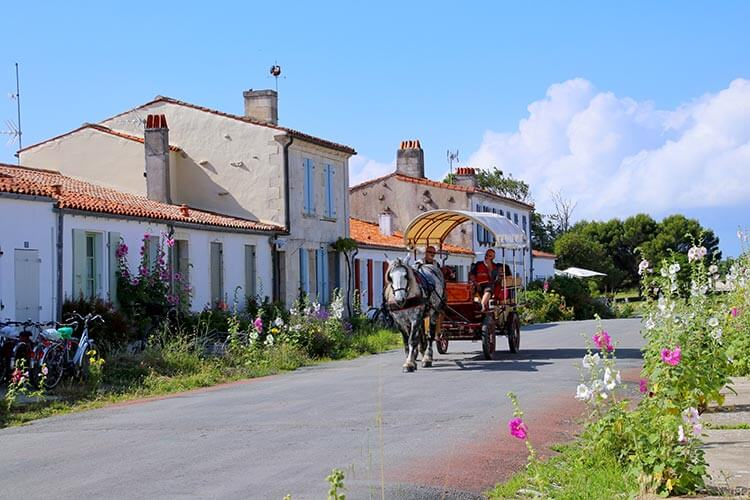A horse carriage carries passengers down one of the colorful lanes with blooming hollyhocks on Île d'Aix
